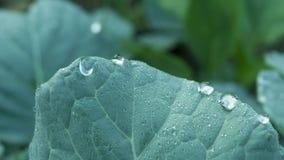 Fim verde fresco da folha acima Fotografia de Stock
