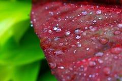 Fim verde fresco da folha acima Imagens de Stock
