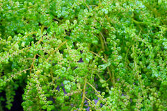 Fim verde fresco da folha acima Foto de Stock Royalty Free