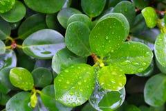 Fim verde fresco da folha acima Imagens de Stock Royalty Free