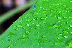 Fim verde fresco da folha acima Imagem de Stock