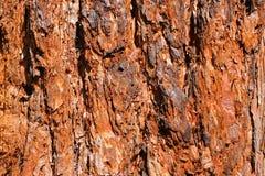 Fim vermelho da casca de árvore acima para um fundo Foto de Stock