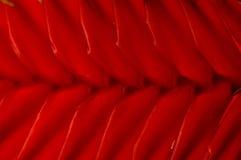 Fim vermelho da textura da planta acima Foto de Stock