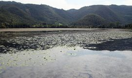 FIMON Lake in the province of Vicenza in Italy with water lilies Stock Photography