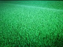 Fin artificielle verte d'herbe  Photo stock