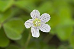 fin blomma royaltyfria bilder