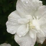 fin blomma Arkivfoton