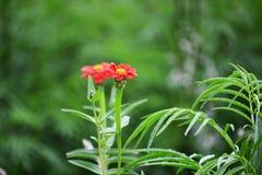 fin blomma Arkivbild