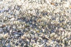 Fin congelée froide lumineuse de détail de glace  Image libre de droits