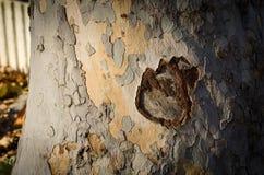 Fin d'écorce d'arbre Image libre de droits