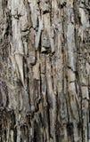 Fin d'écorce d'arbre photographie stock libre de droits