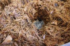 Fin d'agave de fermentation vers le haut de production de Mezcal photo libre de droits