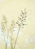 Fin d'herbe d'amour vers le haut d'instruction-macro Photographie stock