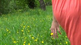 Fin d'herbe de pré vers le haut de mouvement lent de panorama utilisant le steadicam Le mouvement d'appareil-photo banque de vidéos