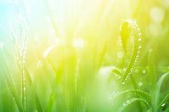 Fin d'herbe verte avec le foyer mou Images stock
