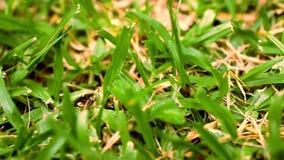 Fin d'instruction-macro d'herbe verte vers le haut Mouvement visuel de décalage banque de vidéos