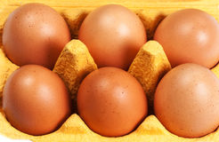 Fin d'oeufs de poulet d'oeufs de Brown  Image stock