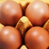 Fin d'oeufs de poulet d'oeufs de Brown vers le haut de macro Photos stock