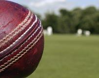 Fin de bille de cricket vers le haut Photo libre de droits
