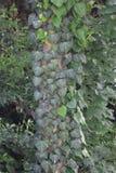 Fin de brunch d'arbre de sapin  Orientation peu profonde Fin pelucheuse de brunch d'arbre de sapin  Concept de papier peint Copie photos libres de droits