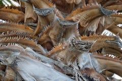 Fin de cactus de Basse-Californie  Images stock