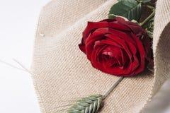 Fin de cadeau d'amour de rose de rouge  Photographie stock libre de droits