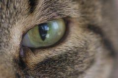 Fin de chat d'oeil vert  Photos stock