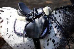 Fin de cheval de sport sous la vieille selle en cuir sur le compet de dressage image libre de droits