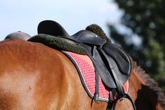 Fin de cheval de sport sous la vieille selle en cuir sur le compet de dressage photographie stock