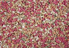 Fin de chien et d'aliments pour chats  makro Photos stock