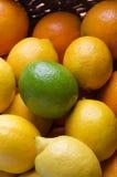 Fin de corbeille de fruits d'agrume complétée avec la chaux Photographie stock libre de droits