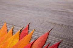 Fin de feuille d'automne sur le fond en bois photos stock