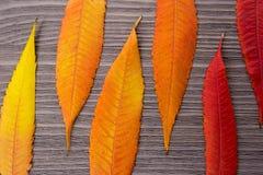 Fin de feuille d'automne sur le fond en bois photo stock