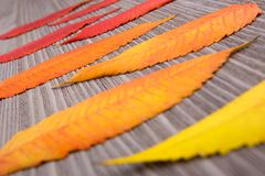 Fin de feuille d'automne sur le fond en bois photographie stock