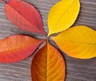 Fin de feuille d'automne sur le fond en bois image libre de droits