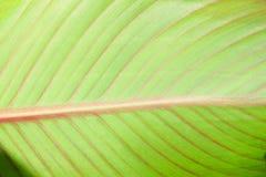 Fin de feuille de plante verte  Photo stock