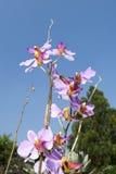 Fin de fleur d'orchidée Photo stock