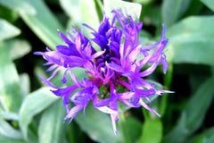Fin de fleur de ressort Image libre de droits