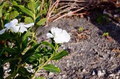 Fin de fleur sauvage vers le haut Image stock