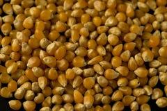 Fin de graine de maïs éclaté vers le haut de macro de modèle Photographie stock libre de droits