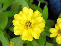 Fin de jaune de fleur  Photos stock