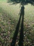 Fin de l'après-midi d'ombre grande Photos libres de droits