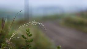 Fin de manière de route de pluie de l'eau de baisses d'herbe  Photographie stock libre de droits