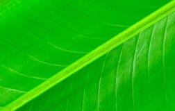Fin de modèle de feuille de banane pour le backgorund Images libres de droits
