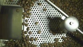 Fin de mouvement lent vers le haut du tir des grains de café crus séchant dans la machine, production rôtie d'industrie de café banque de vidéos