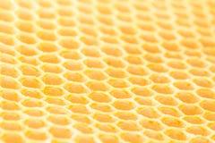 Fin de nid d'abeilles d'abeille de miel  Photos libres de droits