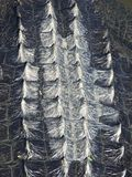 Fin de peau d'alligator  images stock