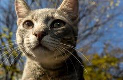 Fin de portrait de chat Photographie stock
