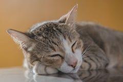 Fin de portrait de chat, chaton mignon Image stock