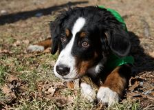 Fin de portrait de chien le jour ensoleillé Images libres de droits